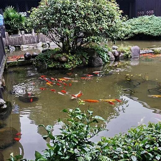 濮阳杰蒙尼鱼池水净化