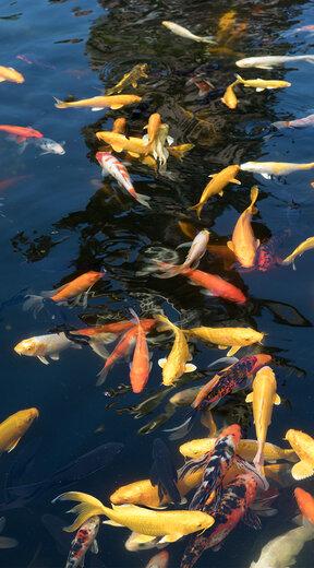 香港杰蒙尼鱼池过滤系统公司
