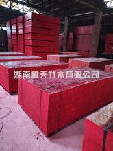 湖南竹膠板高密度實芯全薄簾竹膠板四八尺竹膠板大板覆膜竹膠板圖片