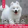 广州哪里有宠物狗卖广州哪里买萨摩耶好心心犬舍
