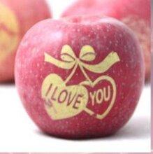 山东蓬莱苹果橙子印字机青岛苹果印字机厂家栖霞苹果印字机烟台小型水果印刷机