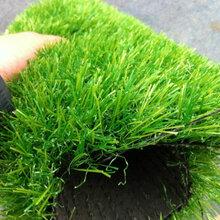 北京塑料草坪厂塑料草坪厂家