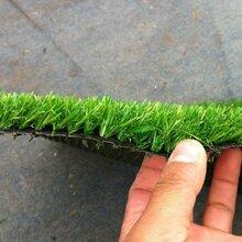 北京塑料草坪哪有卖人造草坪价格