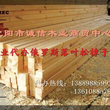 朝阳建筑木方加工厂厂家地址图片