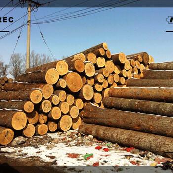 松原市建筑木方加工厂哪里去买