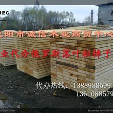 朝阳市白松板材厂家地址图片
