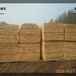 沧州市红松木方在哪里图片2