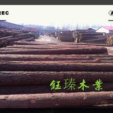 鞍山市包裝箱木材板材方木規格圖片
