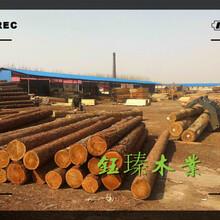 東北白松木方木材板材方木批發市場圖片