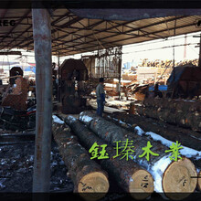 鐵嶺市紅松木方木材板材方木供應商圖片