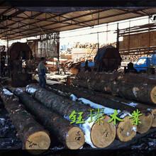 通遼市落葉松木方木材板材方木木材批發圖片