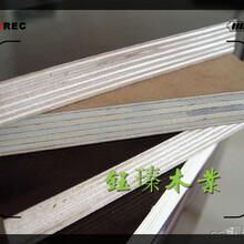 錦州木模板市場圖片