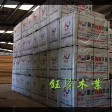 白城竹木胶合板批发市场地址图片