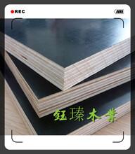 朝阳竹胶板建筑模板批发市场地址图片