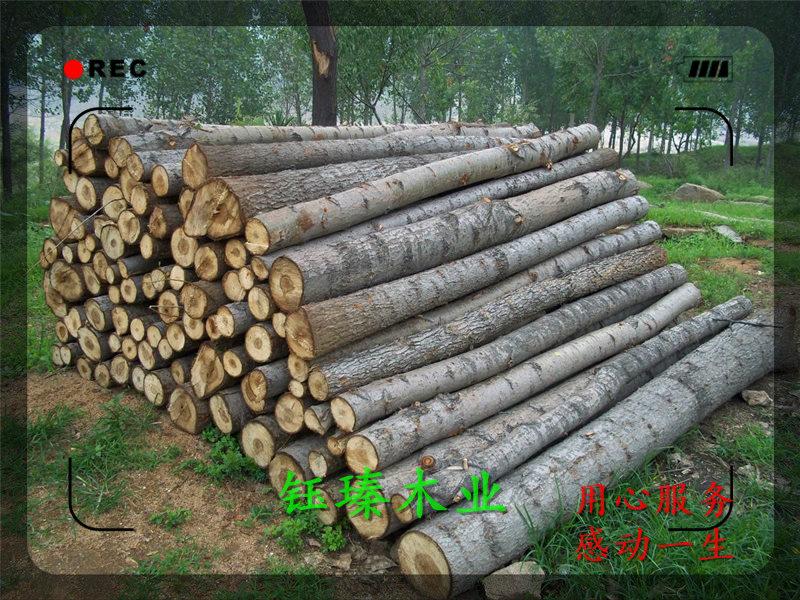 遼源市楊木板材單價