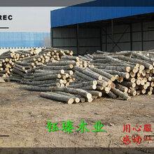 吉林市杨木木方价格厂图片