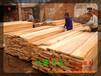 長春楊木板材批發