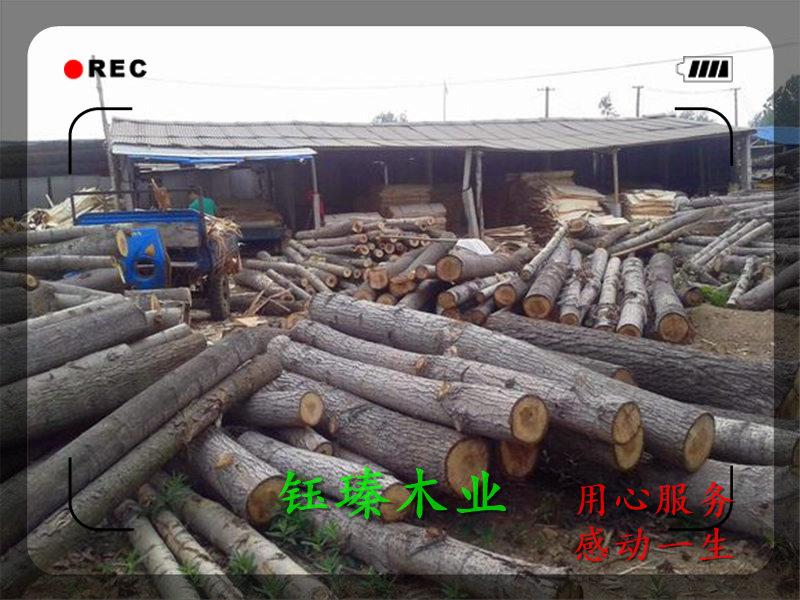 白山市楊木板材供應商