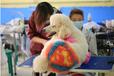 貴州畢節寵物美容師訓犬師獸醫加盟開店咨詢