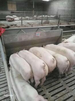 抚州不锈钢采食槽、不锈钢料槽图片、猪用不锈钢料槽尺寸