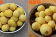 诸城厂家批发土豆去皮机商用小型果蔬磨皮机山药蛋脱皮机