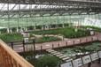 海南休閑農業生態園建設廠家