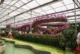 廣西桂林生態植物餐廳建設價格在線咨詢
