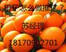 贛南臍橙怎么做推廣?