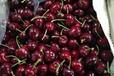 车厘子批发:集果轩Santina专为超市电商水果批发提供货源