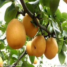 梨树哪里有卖银庄农业出售图片