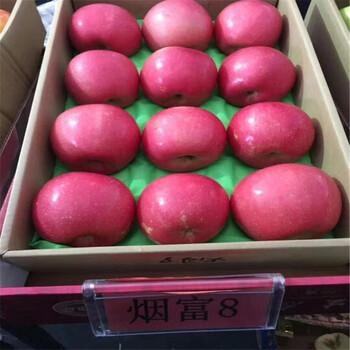 苹果树苗新品种2公分红肉苹果苗多少钱一棵