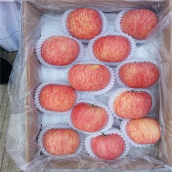 红肉苹果树苗价格银庄农业直销