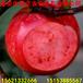 雞心果蘋果苗價格山東蘋果樹苗短枝蘋果樹苗良種蘋果苗供應