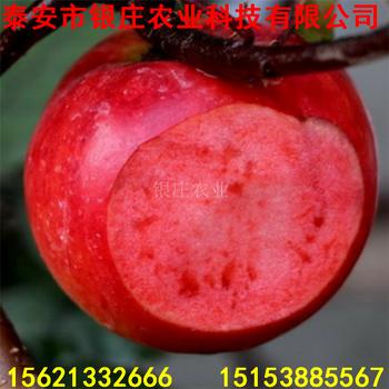 蘋果樹苗新品種蘋果樹苗多少錢一棵
