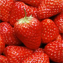 甜寶草莓苗銀莊農業草莓苗批發山東草莓苗基地圖片