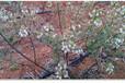 扬州pe管施工方案上门安装大田灌溉