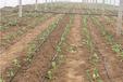 福州迷宫式滴灌带设备视频滴灌带滴灌喷灌