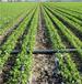 福州迷宫式滴灌带厂的利润pe管道水肥一体