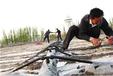 福州迷宫式滴灌带图片pe管道承接工程