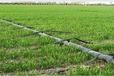 福州迷宫式滴灌带设备视频滴灌喷灌节水灌溉