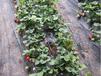 襄陽滴灌管報價滴灌噴灌自動灌溉