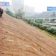 椰丝毯边坡防护园林绿化汇鑫定制图片