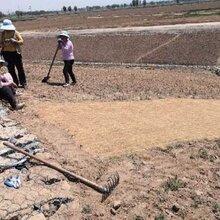 汇鑫边坡护坡生态毯保温保湿毯河道防水图片