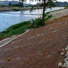 绿化护坡生态毯矿山复绿河道整治植生毯图片