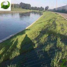 汇鑫护坡草毯抗冲生物毯椰丝毯秸秆毯绿化环保图片