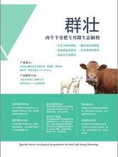 群壮——肉牛羊育肥专用微生态制剂图片