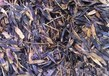 多年生黑麦草种子春季攀枝花价格