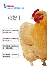 蛋鸡专用预混料哪家价格实惠、质量保证?宝来利来5A蔡博士