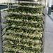 果蔬空氣能烘干設備