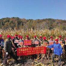 朝陽市喀喇沁左翼蒙古族自治縣華北140產量高